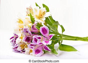 Alstroemeria bouquet isolated over white