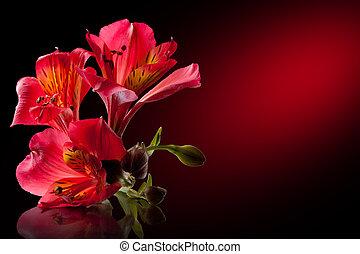 alstroemeria, fleur