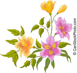 Alstroemeria, isolated - Flowers alstroemeria, summer...