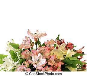 alstromeria, bouquet, fleurs blanches
