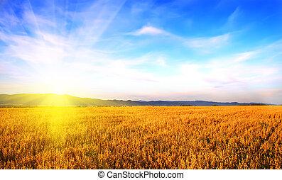 altai, field., russia, 日出