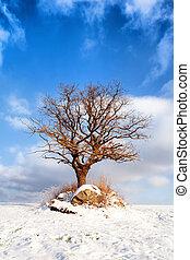 alter baum, in, a, winter, feld, auf, a, hintergrund, von, blauer himmel