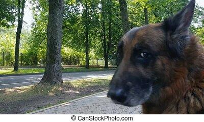 alter hund, draußen