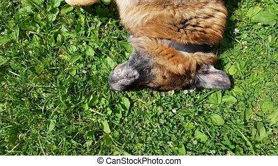 alter hund, spaß haben, draußen