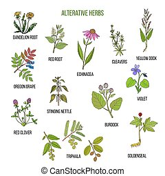 Alterative herbs. Hand drawn set of medicinal plants -...