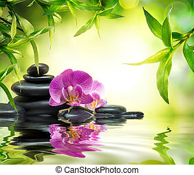 alternativa, giardino, massaggio