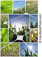 Alternative energy concept - Green corn field collage with...