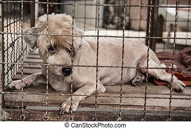 altes , einsam, käfig, hund