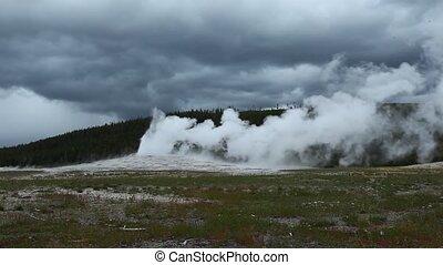 altes, geysir,  Yellowstone, treu