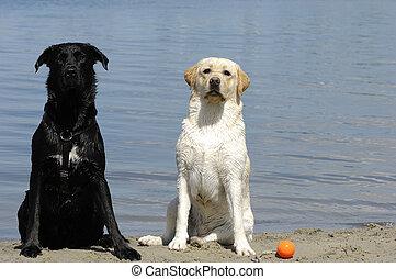 altes , junger, hund