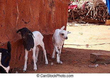altes , masai, dorf, hütten, oder, clay., armut, elend,...