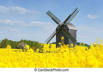 altes , windmühle, in, a, feld, von, rapeseed