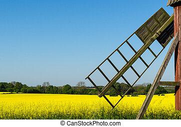 altes , windmühle, per, a, blüte, rapeseed, feld