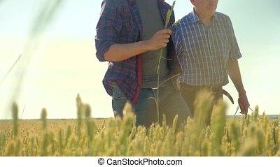 altes , zwei, landwirte, sommer, mann, weizen- feld, rennender , in, der, feld, weizen, bread., zeitlupe, video., landwirt, lebensstil, ökologie, concept., landwirtschaft, arbeiter, arbeitende , in, der, field., klug, landwirtschaft, ökologie, mann, arbeiter, landwirtschaft, begriffe