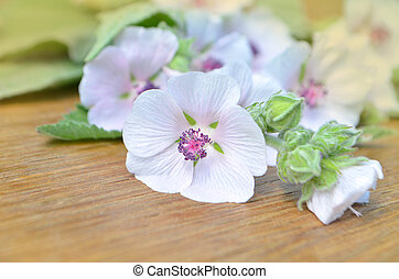 Althaea officinalis flowers - Marsh mallow flowers