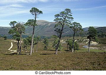altiplanos, escócia