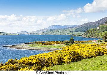 altiplanos, loch, escócia, vassoura