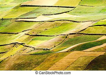 altitudine alta, agricoltura, in, ecuador