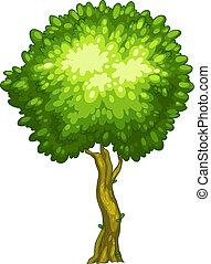 alto, árbol