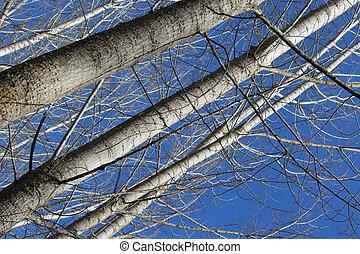 alto, árboles