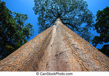 alto, árvore