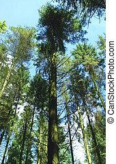 alto, árvores