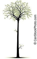 alto, albero