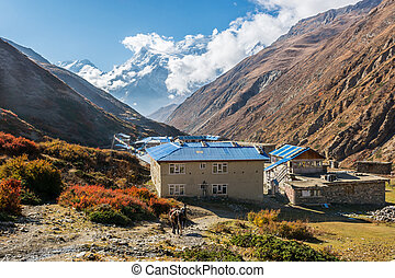 alto, altitudine,  kharka,  yak, villaggio