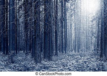 alto, antigas, árvores pinho, em, a, forest.