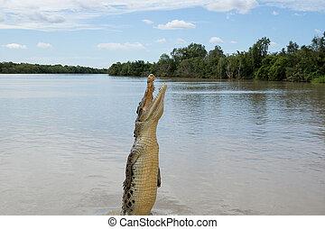 alto, crocodilo, pular, rio