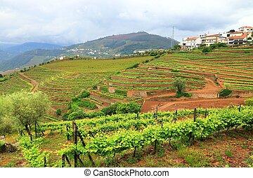 Alto Douro vineyards, Portugal