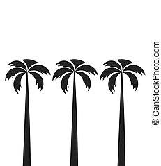 alto, palma, três, árvores.