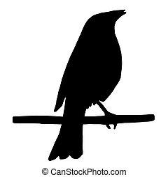 alto, qualidade, silueta, de, um, pássaro, ligado, ramo