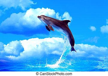 alto salto, delfino