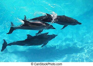 alto, turquesa, ángulo, tres, agua, vista, delfines