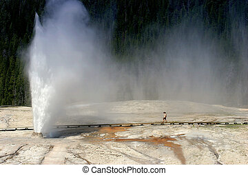 alveare, geyser