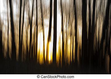 alvorada, em, floresta