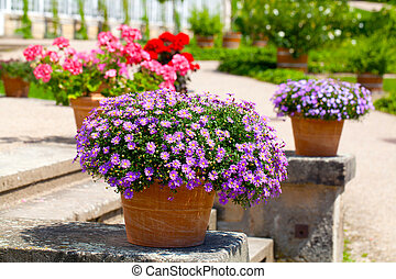 aménagé, jardin fleur