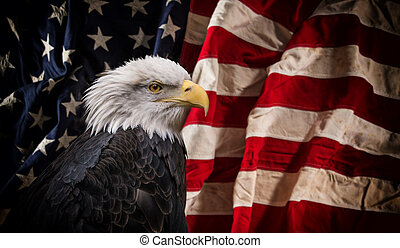américain, aigle chauve, à, flag.