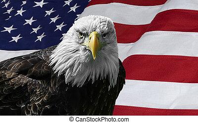 américain, aigle chauve, sur, drapeau