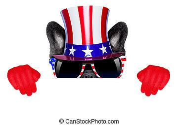 américain, chien