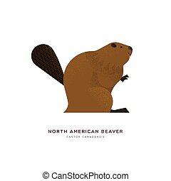 américain, dessin animé, isolé, castor, animal, nord