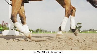 américain, homme africain, équitation, sien, cheval, ...