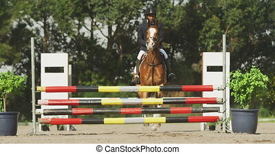 américain, homme africain, obstacle, sien, cheval, dressage...