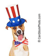 américain, jour, indépendance, chien