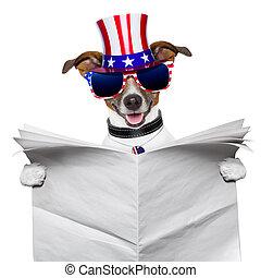 américain, lecture, chien
