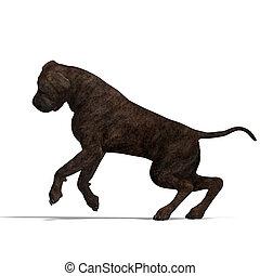 américain, mastiff, dog., 3d, rendre, à, attachant voie...