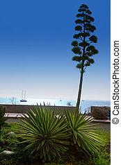 Amadores in Gran Canaria Canary islands