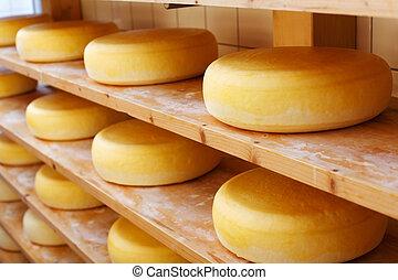 amadurecido, cheese-wheels, ligado, prateleiras