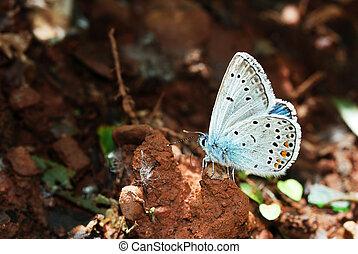 Amandas Blue